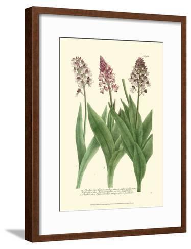 Lilac Blooms II-Johann Wilhelm Weinmann-Framed Art Print