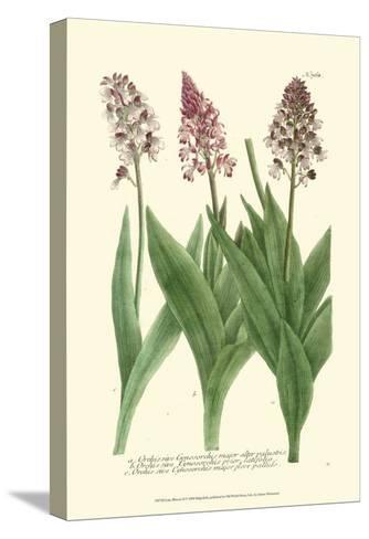 Lilac Blooms II-Johann Wilhelm Weinmann-Stretched Canvas Print