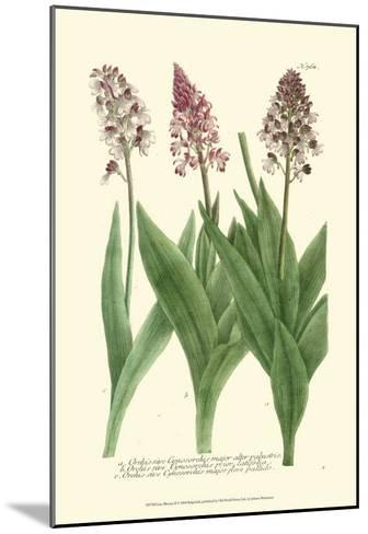 Lilac Blooms II-Johann Wilhelm Weinmann-Mounted Art Print
