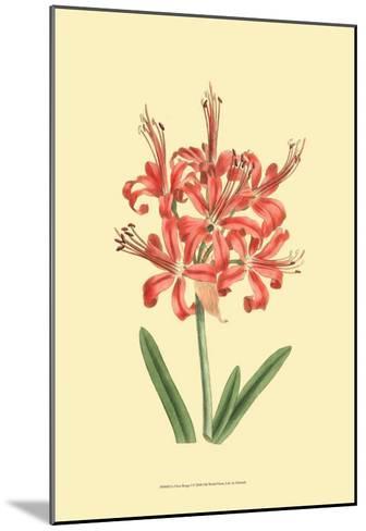 Le Fleur Rouge I-Sydenham Teast Edwards-Mounted Art Print