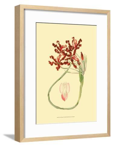 Le Fleur Rouge II-Sydenham Teast Edwards-Framed Art Print