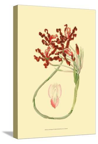 Le Fleur Rouge II-Sydenham Teast Edwards-Stretched Canvas Print