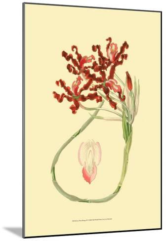 Le Fleur Rouge II-Sydenham Teast Edwards-Mounted Art Print