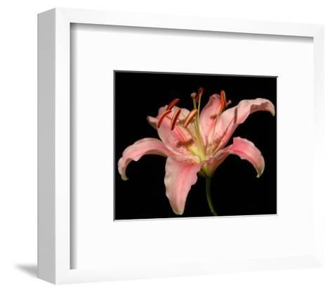 Dream Lilies II-Renee W^ Stramel-Framed Art Print