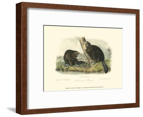 American Beaver-John James Audubon-Framed Art Print