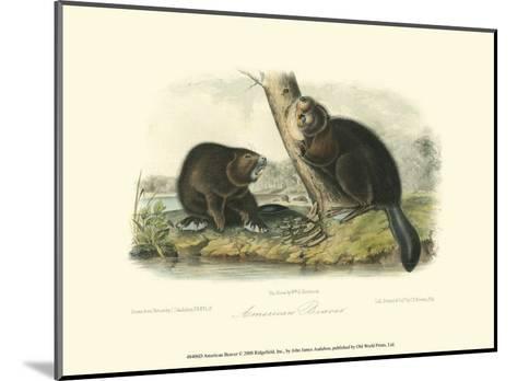 American Beaver-John James Audubon-Mounted Art Print