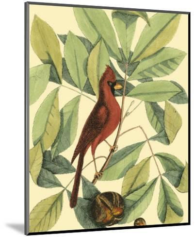 Red Bird and Hiccory Tree-Mark Catesby-Mounted Art Print