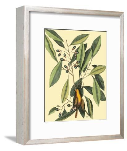 The Carolina Laurus-Mark Catesby-Framed Art Print