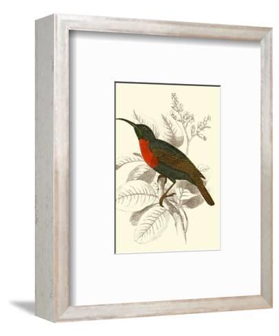 Jardine Hummingbird III-Sir William Jardine-Framed Art Print