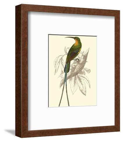 Jardine Hummingbird V-Sir William Jardine-Framed Art Print