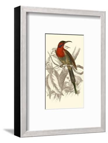 Jardine Hummingbird VI-Sir William Jardine-Framed Art Print