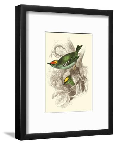 Fire-Crowned and Common Goldcrest-Sir William Jardine-Framed Art Print