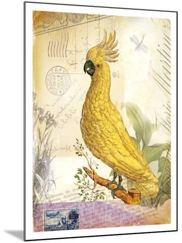 Parrot--Mounted Giclee Print