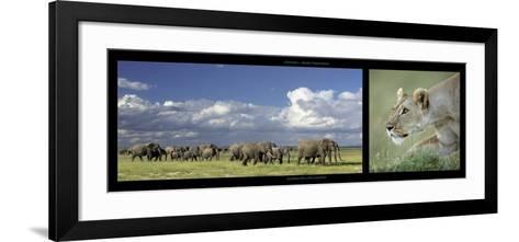 Elephants and Lioness-Michel & Christine Denis-Huot-Framed Art Print