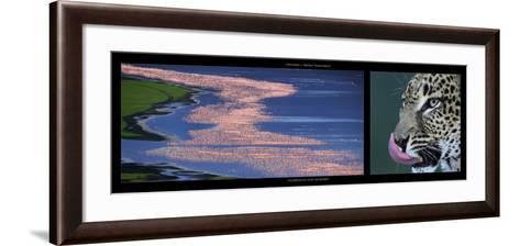 Flamingos and Leopard-Michel & Christine Denis-Huot-Framed Art Print