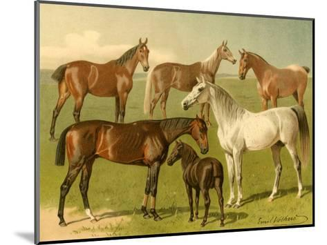 Horse Breeds I-Emil Volkers-Mounted Art Print