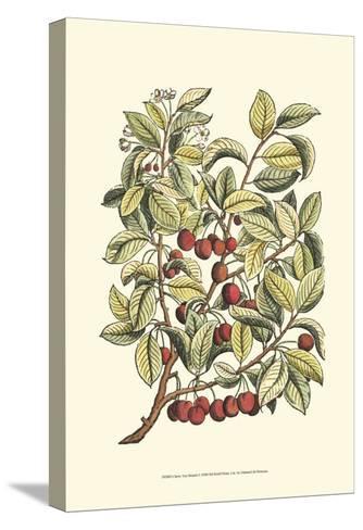 Cherry Tree Branch-Henri Du Monceau-Stretched Canvas Print