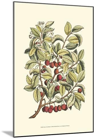 Cherry Tree Branch-Henri Du Monceau-Mounted Art Print