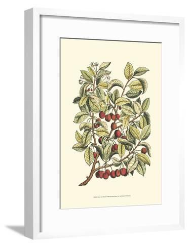 Cherry Tree Branch-Henri Du Monceau-Framed Art Print
