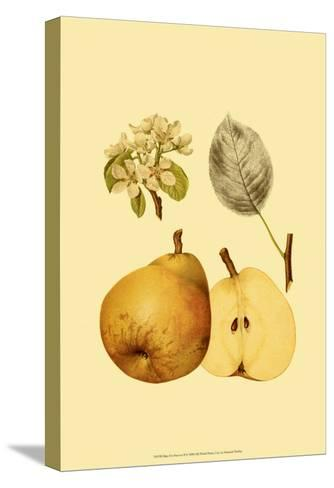 Ripe for Harvest II-Heinrich Pfeiffer-Stretched Canvas Print