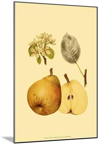 Ripe for Harvest II-Heinrich Pfeiffer-Mounted Art Print