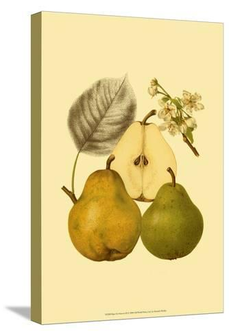 Ripe for Harvest III-Heinrich Pfeiifer-Stretched Canvas Print