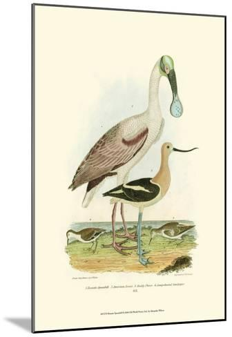 Roseate Spoonbill-Alexander Wilson-Mounted Art Print