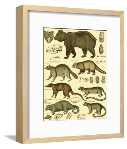 Oken Bear and Racoon-Lorenz Oken-Framed Art Print