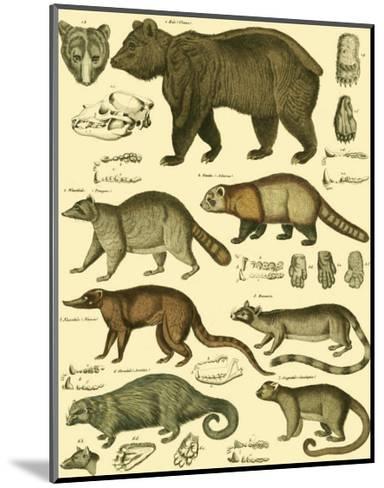 Oken Bear and Racoon-Lorenz Oken-Mounted Art Print