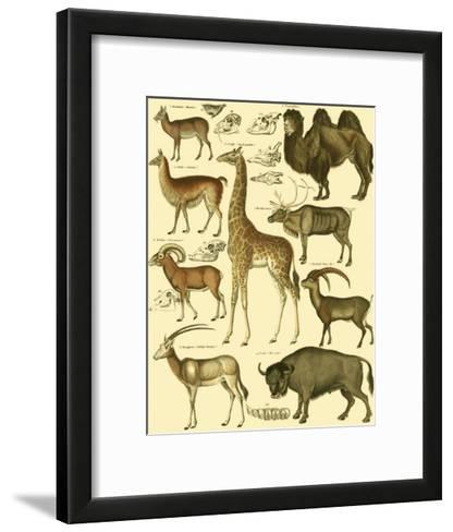 Oken Giraffe and Camel-Lorenz Oken-Framed Art Print