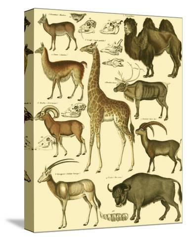 Oken Giraffe and Camel-Lorenz Oken-Stretched Canvas Print