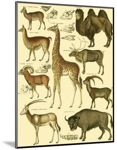 Oken Giraffe and Camel-Lorenz Oken-Mounted Art Print