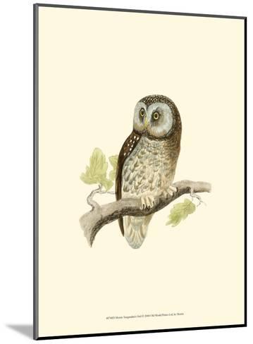 Tengmalm's Owl-Reverend Francis O^ Morris-Mounted Art Print