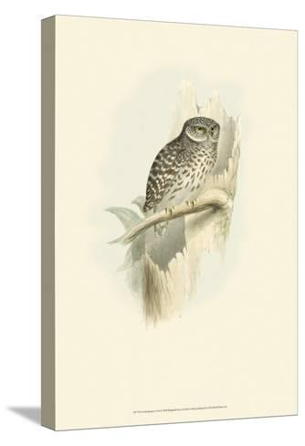 Sparrow Owl-John Gould-Stretched Canvas Print