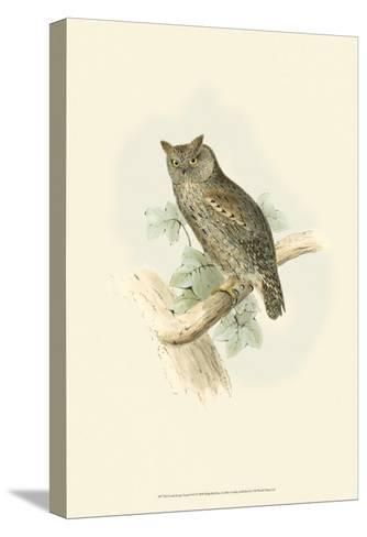 Scops-Eared Owl-John Gould-Stretched Canvas Print