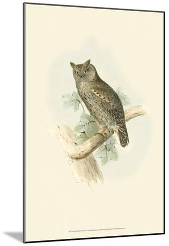 Scops-Eared Owl-John Gould-Mounted Art Print