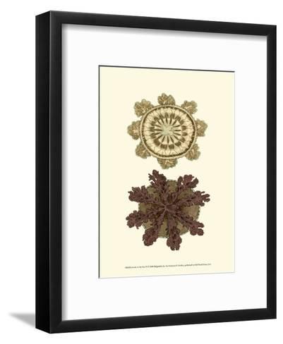 Jewels of the Sea VI-Frederick P^ Nodder-Framed Art Print