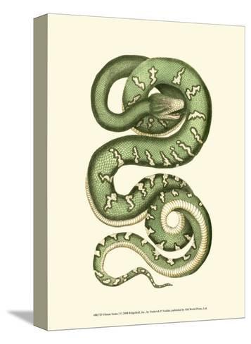 Vibrant Snake I-Frederick P^ Nodder-Stretched Canvas Print