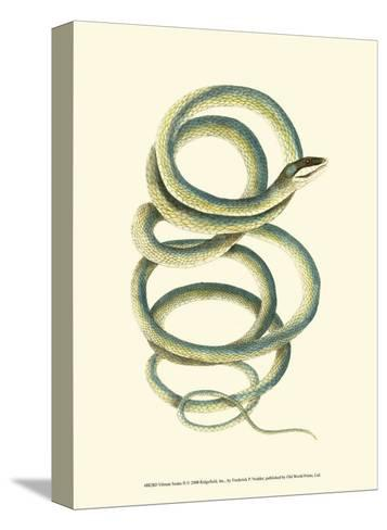 Vibrant Snake II-Frederick P^ Nodder-Stretched Canvas Print
