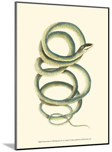 Vibrant Snake II-Frederick P^ Nodder-Mounted Art Print