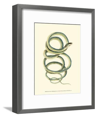 Vibrant Snake II-Frederick P^ Nodder-Framed Art Print