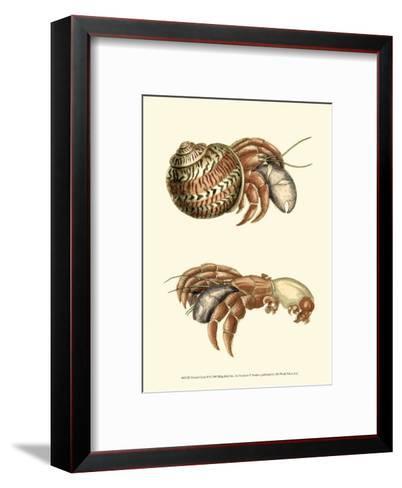 Hermit Crabs II-Frederick P^ Nodder-Framed Art Print