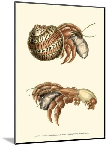 Hermit Crabs II-Frederick P^ Nodder-Mounted Art Print