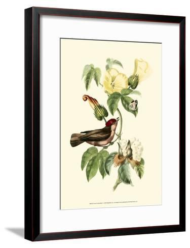 Exotic Birds I-Georges Cuvier-Framed Art Print