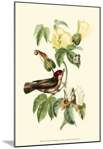 Exotic Birds I-Georges Cuvier-Mounted Art Print