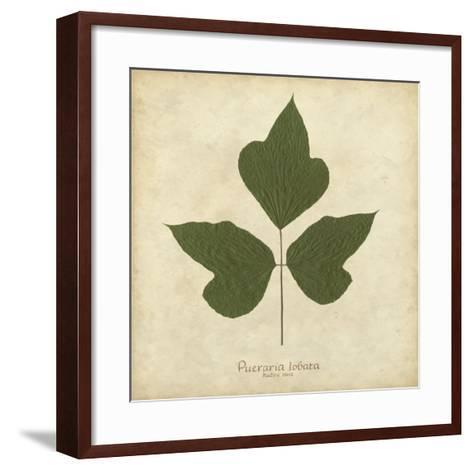 Kudzu Vine-Becky Davis-Framed Art Print
