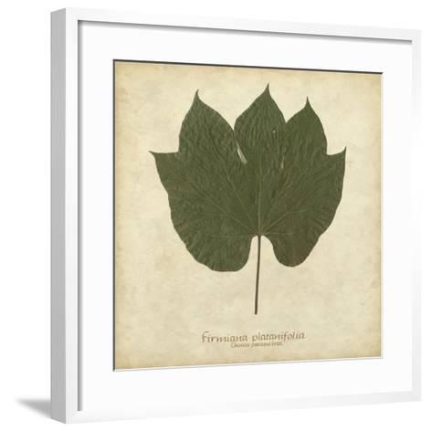 Chinese Parasol Tree-Becky Davis-Framed Art Print