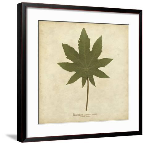 Castor Bean-Becky Davis-Framed Art Print