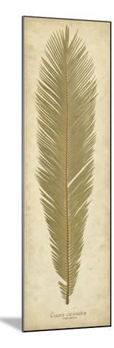 Sago Palm II-Becky Davis-Mounted Giclee Print