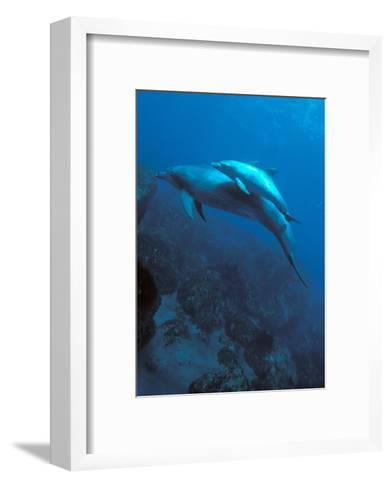 Mother and Baby Dolphins-Charles Glover-Framed Art Print